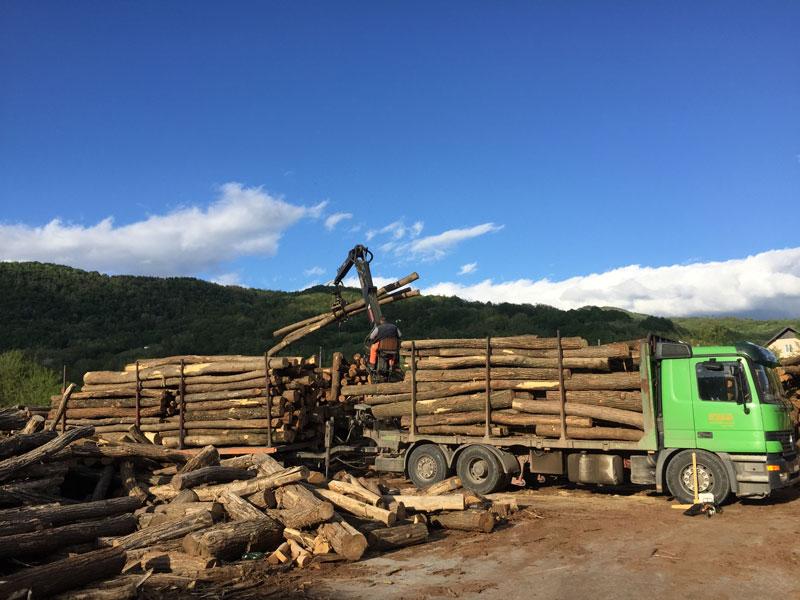 Neue Robinien Stämme aus der ganzen Region Serbiens.